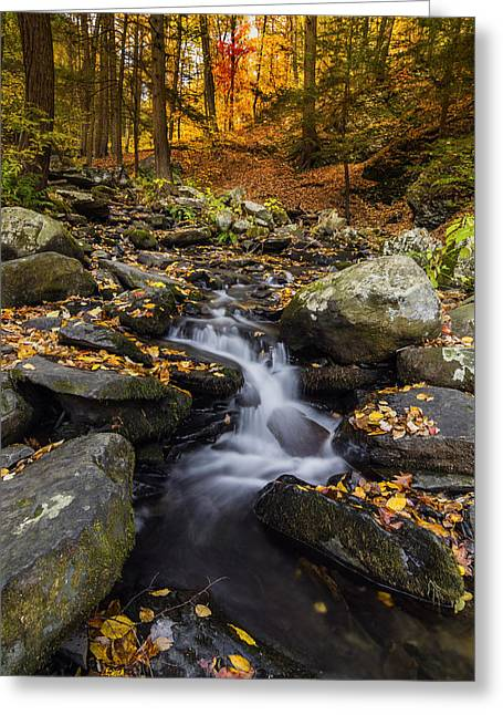 Overcast Day Greeting Cards - Autumn glory at Bushkill Falls State Park Pennsylvania USA Greeting Card by Vishwanath Bhat