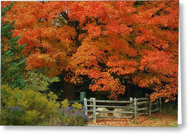 Autumn Glory Greeting Card by Maria Keady