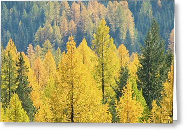 Green And Yellow Greeting Cards - Autumn Gold Greeting Card by Idaho Scenic Images Linda Lantzy