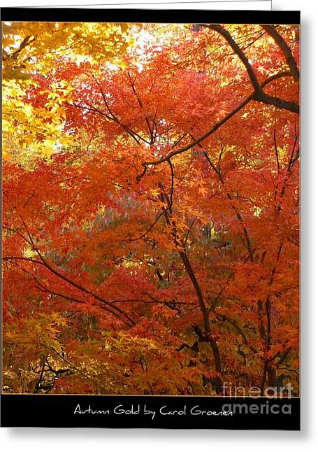 Landscap Greeting Cards - Autumn Gold Poster Greeting Card by Carol Groenen