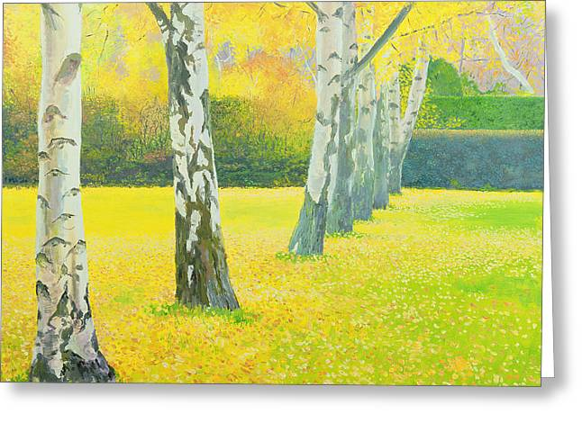 Tree Lines Greeting Cards - Autumn Gold Greeting Card by William Ireland