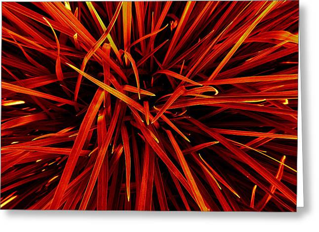 Office Space Greeting Cards - Autumn Grass  Greeting Card by Jerod Scheiferstein