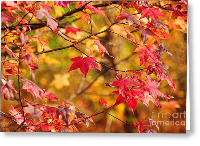 Autumn Has Arrived Greeting Card by Paul Ward