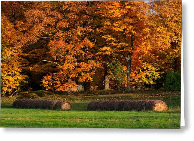 Fall Trees Greeting Cards - Autumn Hay Greeting Card by Brook Burling