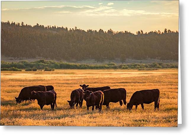 Autumn Herd Greeting Card by Todd Klassy
