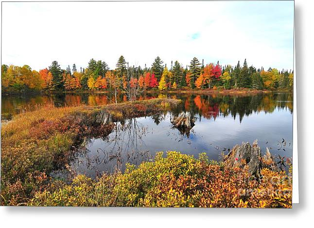 Autumn In Coos County Greeting Card by Catherine Reusch  Daley