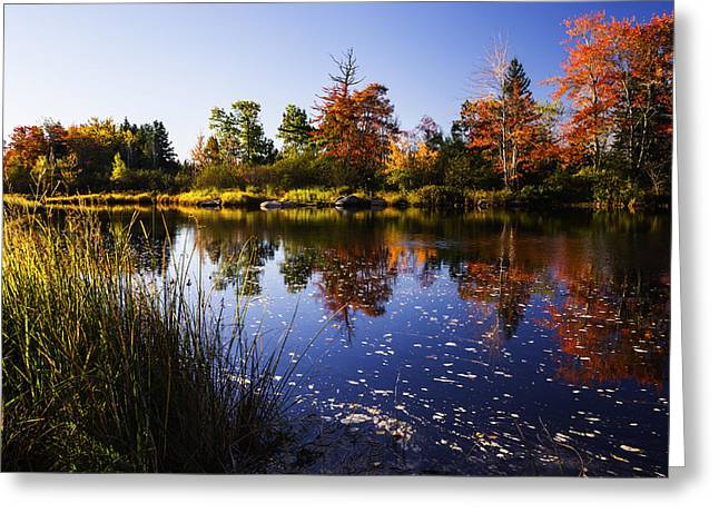 Reflections Of Sky In Water Greeting Cards - Autumn in Maine USA Greeting Card by Vishwanath Bhat