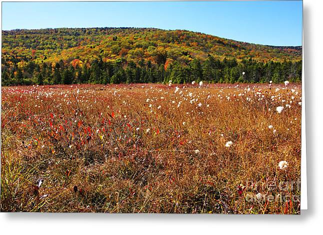 Autumn In The Glades Greeting Card by Thomas R Fletcher