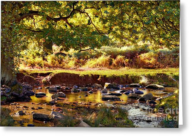 Brown Leaf Greeting Cards - Autumn in the Lin Valley Greeting Card by John Edwards