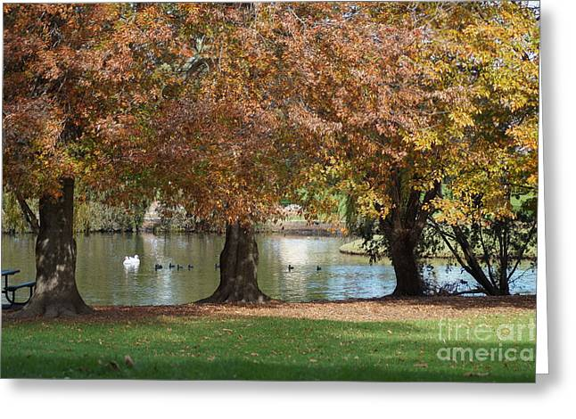 Fall Trees Greeting Cards - Autumn In The Park Greeting Card by Merrin Jeff