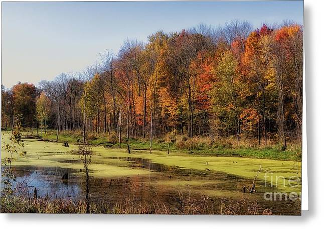 Autumn In The Wetlands Greeting Card by Susan Grube