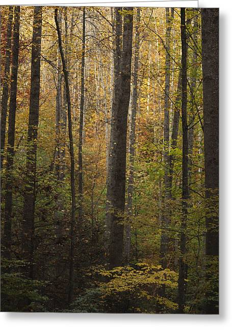 Great Smoky Mountains Greeting Cards - Autumn in the Woods Greeting Card by Andrew Soundarajan
