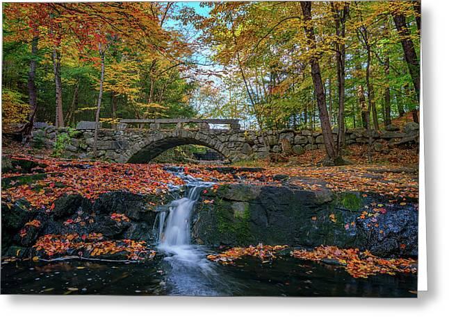 Autumn In Vaughan Woods Greeting Card by Rick Berk
