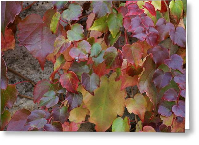 Autumn ivy Greeting Card by Jessica Rose