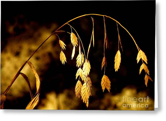 Dappled Sunlight Greeting Cards - Autumn Jewelery Greeting Card by Joe Jake Pratt
