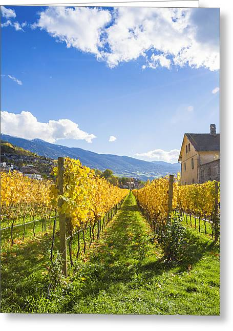 Grape Vines Pyrography Greeting Cards - Autumn Landscape in South Tyrol in Italy Greeting Card by Riccardo Zimmitti