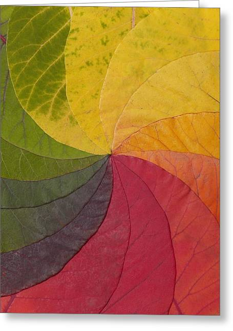 Chloroplast Greeting Cards - Autumn Leaf Colour Wheel Greeting Card by David Parker