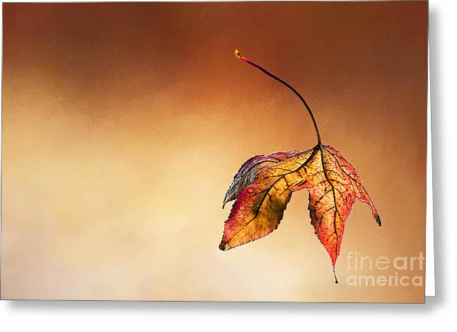Autumn Leaf Fallen Greeting Card by Kaye Menner