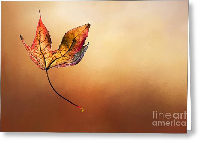 Autumn Leaf Falling By Kaye Menner Greeting Card by Kaye Menner