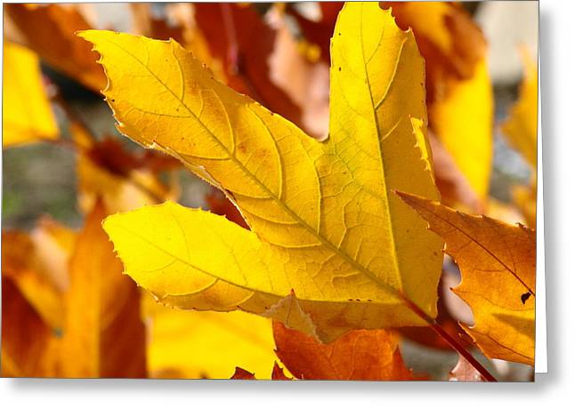 Yelllow Greeting Cards - Autumn Leaf Greeting Card by Liz Vernand