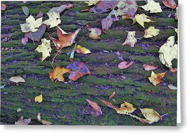 Autumn Leaves And Moss On Log   Indiana Greeting Card by Rory Cubel