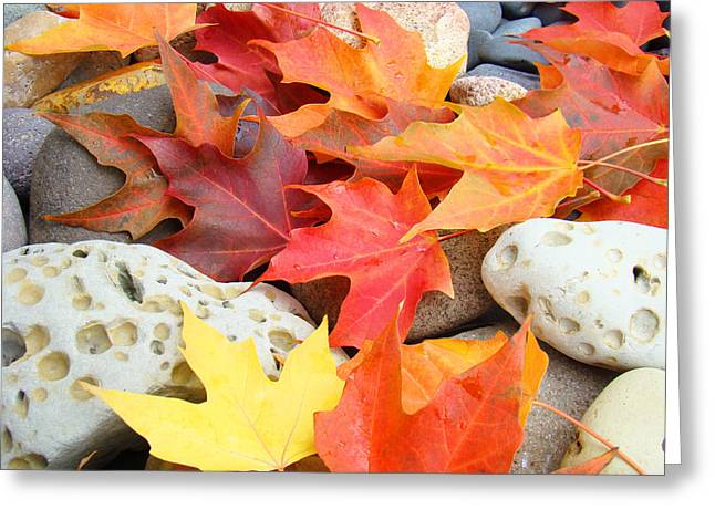 Baslee Troutman Greeting Cards - AUTUMN LEAVES Art Print Coastal FOSSIL ROCKS Baslee Troutman Greeting Card by Baslee Troutman