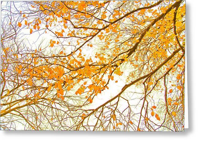 Autumn Leaves Greeting Card by Az Jackson