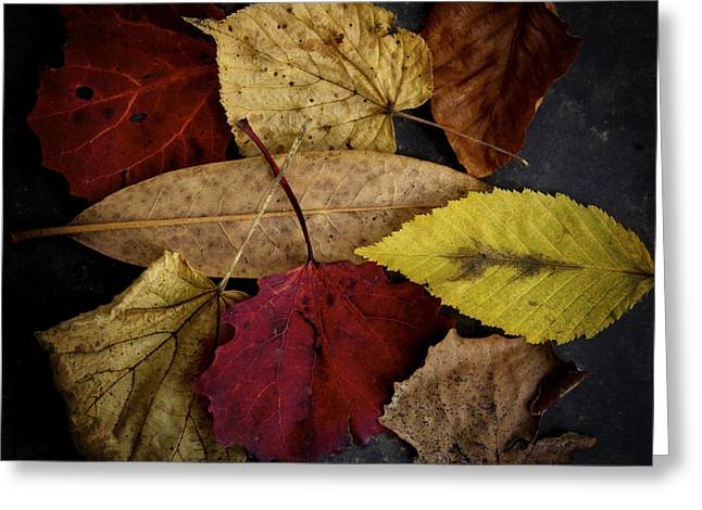 Directly Above Greeting Cards - Autumn leaves Greeting Card by Bernard Jaubert