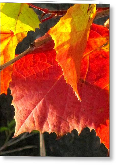 Indiana Autumn Mixed Media Greeting Cards - Autumn Leaves Greeting Card by Bruce McEntyre