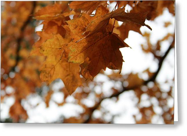 Book Cover Art Greeting Cards - Autumn Leaves- by Linda Woods Greeting Card by Linda Woods