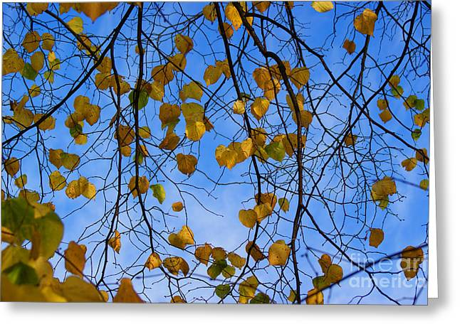 Autumn Art Greeting Cards - Autumn leaves Greeting Card by Carol Lynch