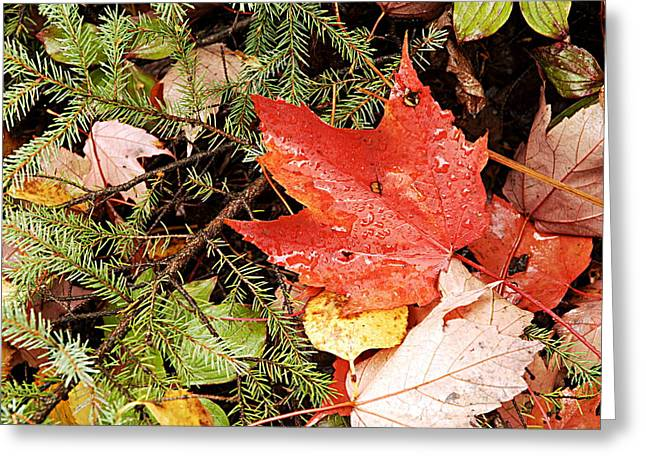Larry Ricker Greeting Cards - Autumn Leaves Greeting Card by Larry Ricker