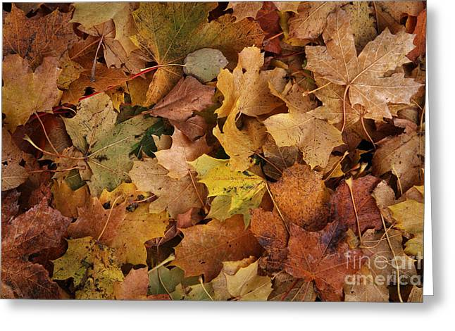 Autumn Prints Greeting Cards - Autumn Leaves Greeting Card by Lutz Baar