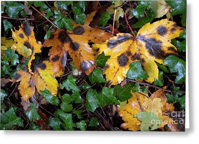 Fall Grass Greeting Cards - Autumn leaves on the ground Greeting Card by Sami Sarkis