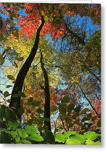 Autumn Light Greeting Card by Dave Alexander