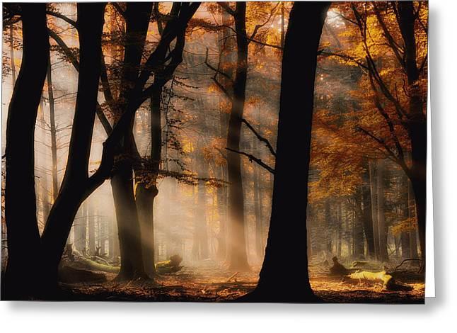Sunlight Greeting Cards - Autumn Light Greeting Card by Jan Paul Kraaij