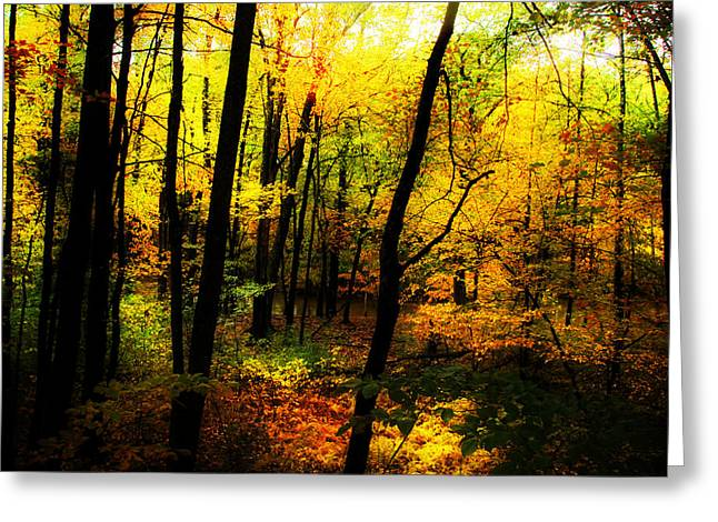 Recently Sold -  - Reflections Of Sky In Water Greeting Cards - Autumn Light Greeting Card by William Carroll