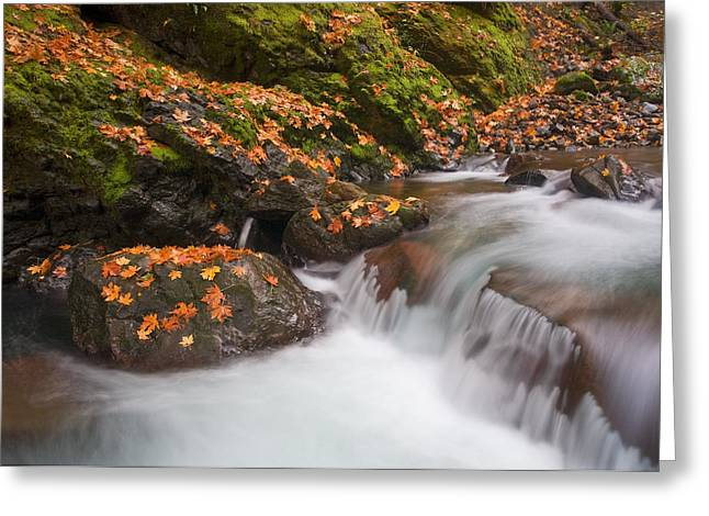 Waterfall Greeting Cards - Autumn Litter Greeting Card by Mike  Dawson