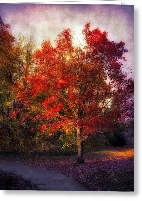"""""""maple Trees"""" Greeting Cards - Autumn Maple 2 Greeting Card by Jessica Jenney"""