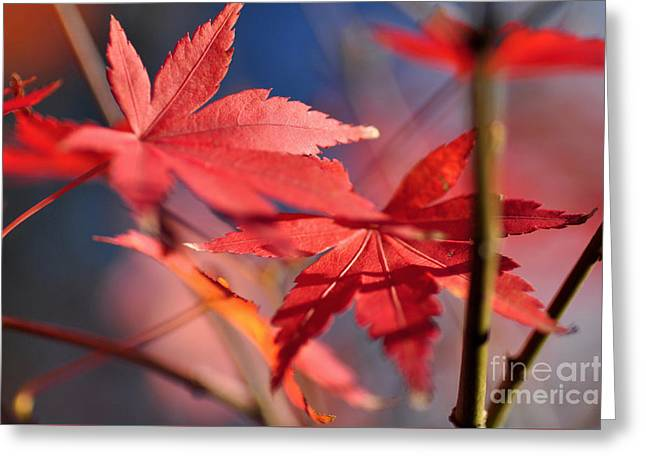 Kaye Menner Floral Greeting Cards - Autumn Maple Greeting Card by Kaye Menner