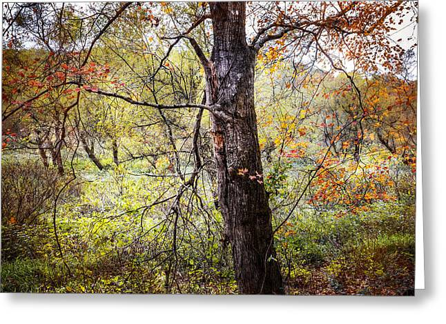 Sunset In The Forest Greeting Cards - Autumn Meadow Greeting Card by Debra and Dave Vanderlaan