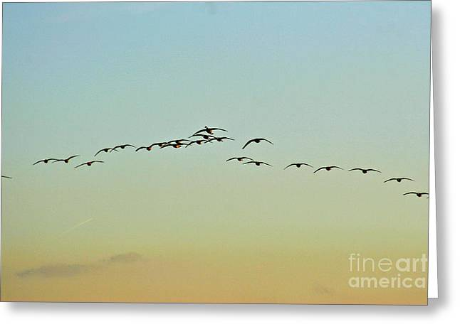 Sean Griffin Greeting Cards - Autumn Migration Greeting Card by Sean Griffin