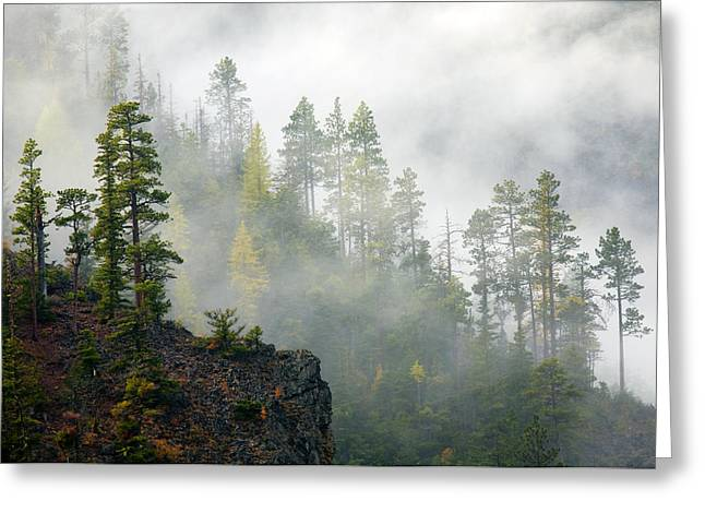 Larch Greeting Cards - Autumn Mist Greeting Card by Mike  Dawson