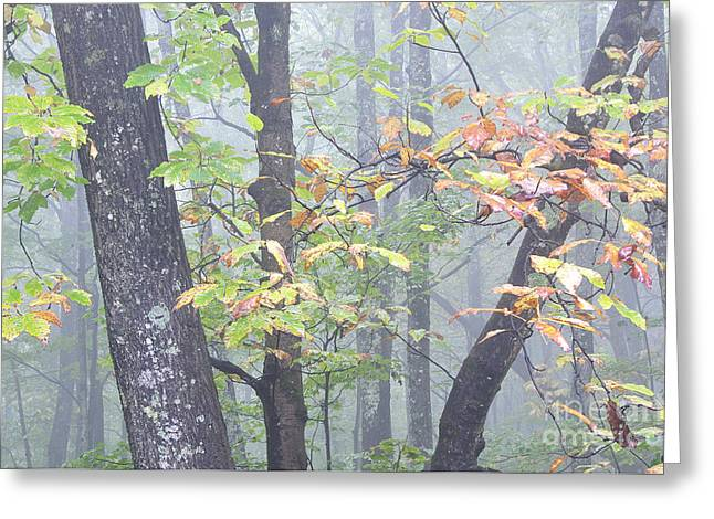 Allegheny Greeting Cards - Autumn Mist Greeting Card by Thomas R Fletcher