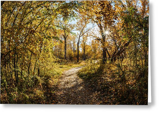 Fallen Leaf Greeting Cards - Autumn morning along Green Belt in Boise Idaho Greeting Card by Vishwanath Bhat