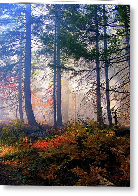 Autumn Morning Fire And Mist Greeting Card by Diane Schuster