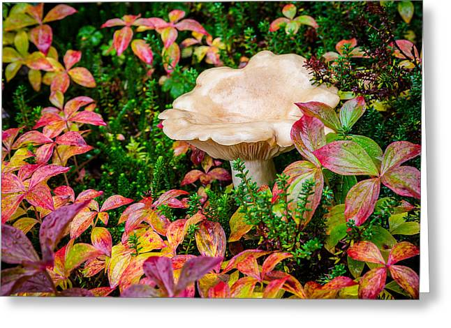 Alaska Mushroom Greeting Cards - Autumn Mushroom Greeting Card by Tim Newton