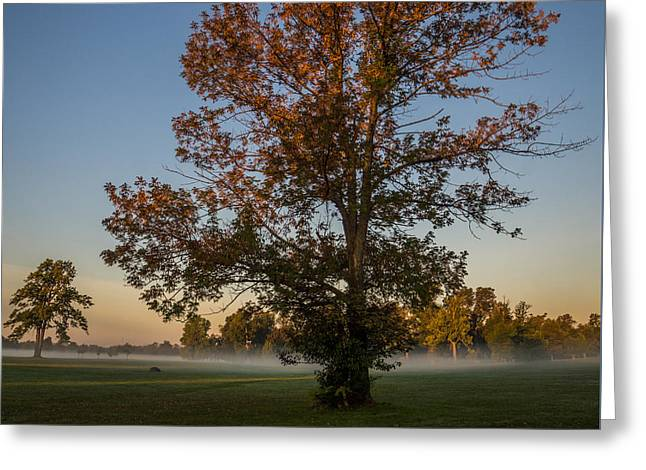 Misty Greeting Cards - Autumn Oak on Misty Meadow Greeting Card by Chris Bordeleau