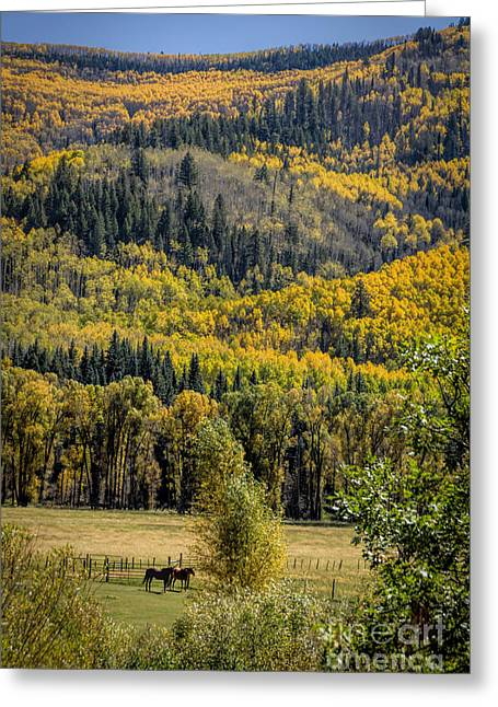 Fall Colors Greeting Cards - Autumn On A Colorado Range Greeting Card by Janice Rae Pariza