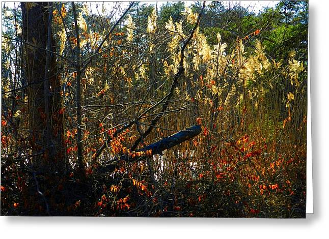 Autumn On The Sough Greeting Card by Julie Dant